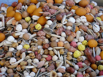 Macronutrients Iron Nuts Seeds Legumes